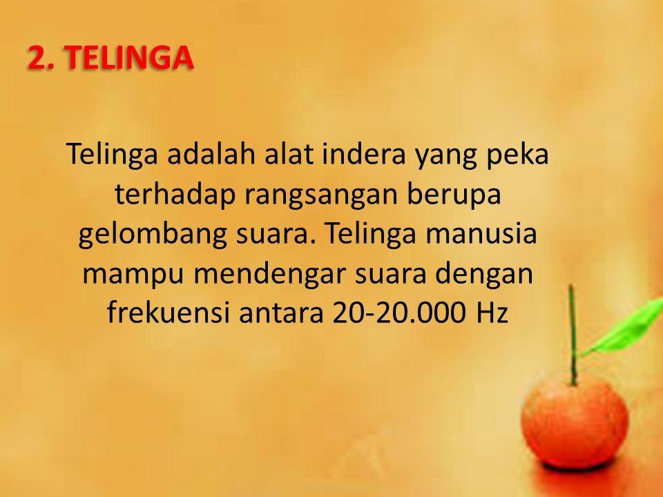 2. TELINGA