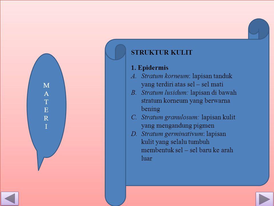 STRUKTUR KULIT M. A T E R. I. 1. Epidermis. Stratum korneum: lapisan tanduk yang terdiri atas sel – sel mati.