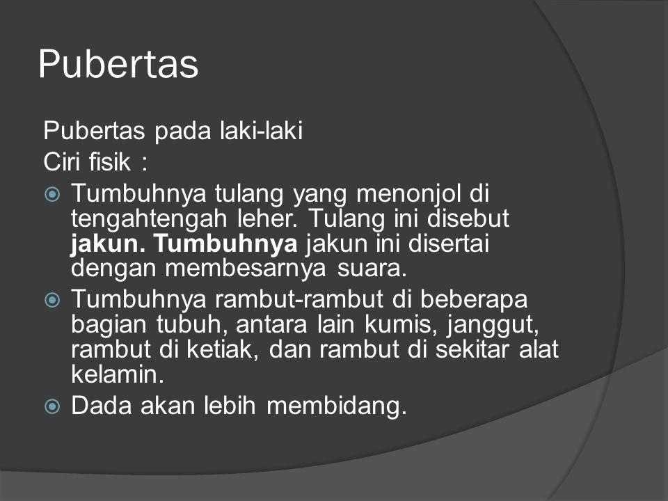 Pubertas Pubertas pada laki-laki Ciri fisik :