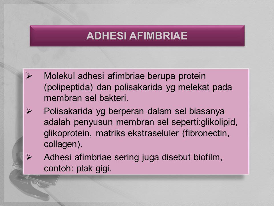 ADHESI AFIMBRIAE Molekul adhesi afimbriae berupa protein (polipeptida) dan polisakarida yg melekat pada membran sel bakteri.