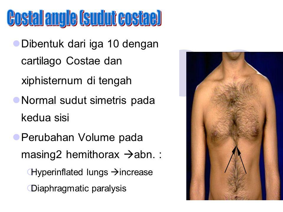 Costal angle (sudut costae)