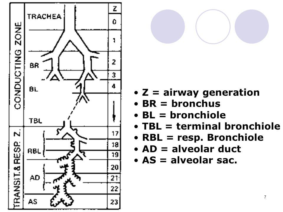 Z = airway generation BR = bronchus. BL = bronchiole. TBL = terminal bronchiole. RBL = resp. Bronchiole.