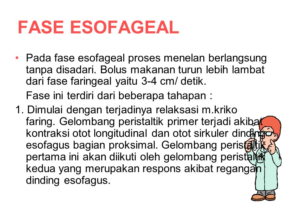 FASE ESOFAGEAL