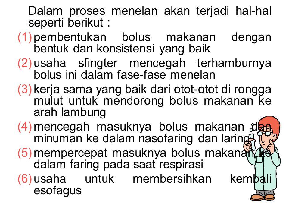 Dalam proses menelan akan terjadi hal-hal seperti berikut :