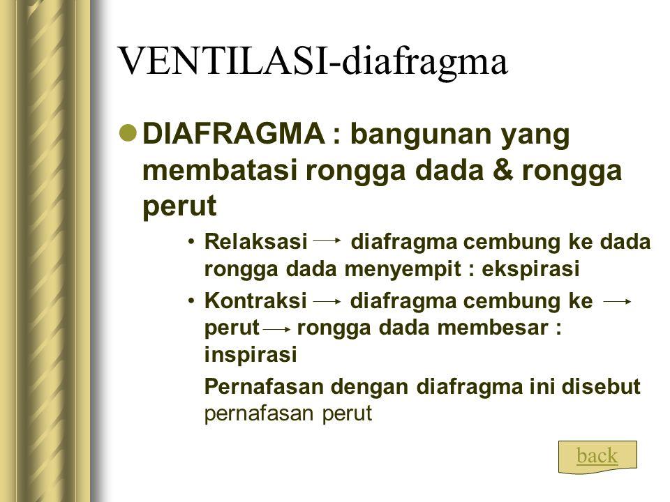 VENTILASI-diafragma DIAFRAGMA : bangunan yang membatasi rongga dada & rongga perut.