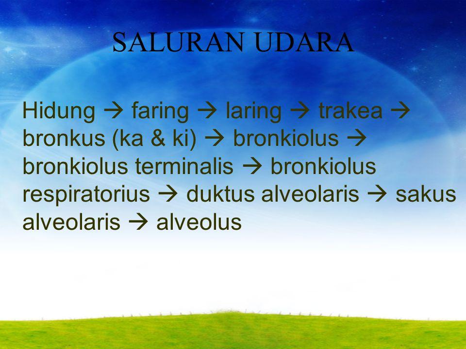 SALURAN UDARA