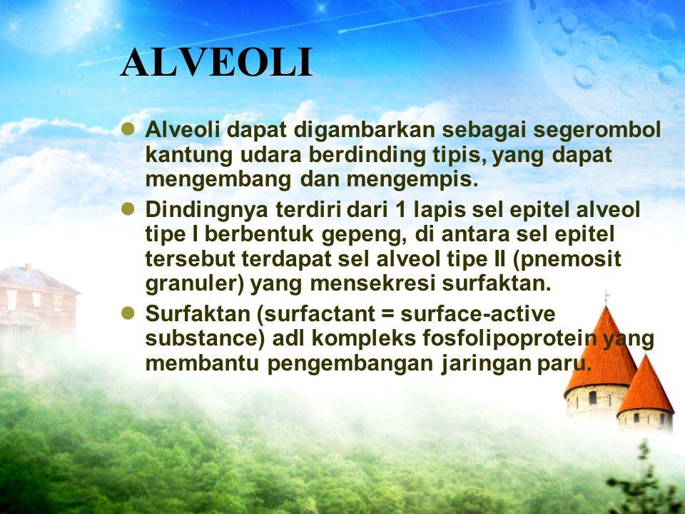 ALVEOLI Alveoli dapat digambarkan sebagai segerombol kantung udara berdinding tipis, yang dapat mengembang dan mengempis.