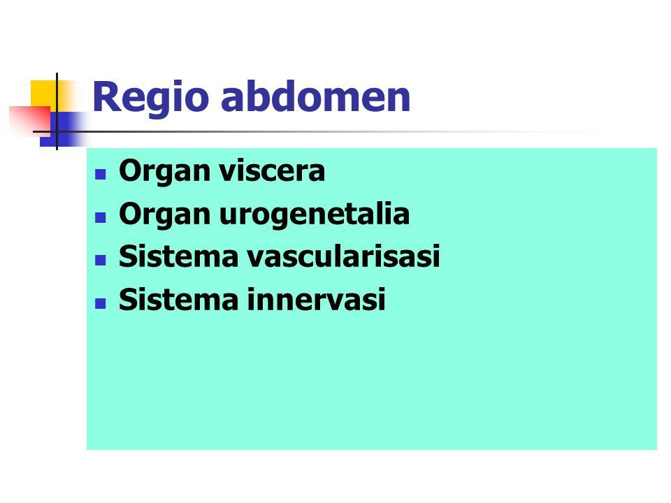 Regio abdomen Organ viscera Organ urogenetalia Sistema vascularisasi