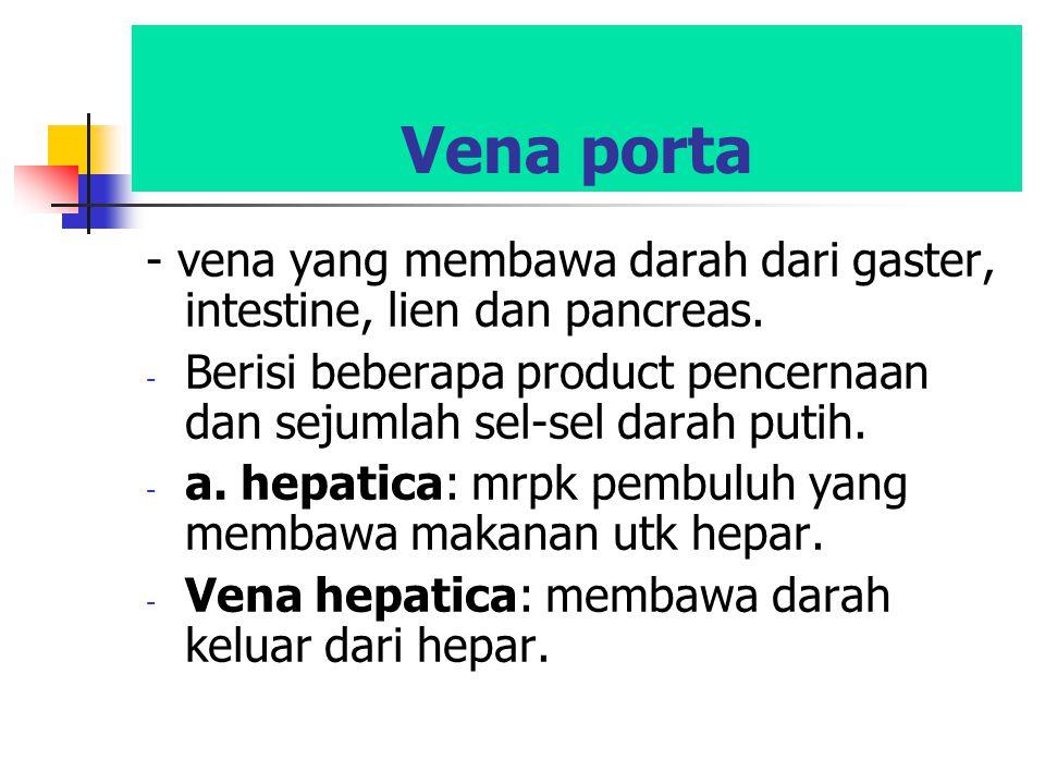 Vena porta - vena yang membawa darah dari gaster, intestine, lien dan pancreas. Berisi beberapa product pencernaan dan sejumlah sel-sel darah putih.