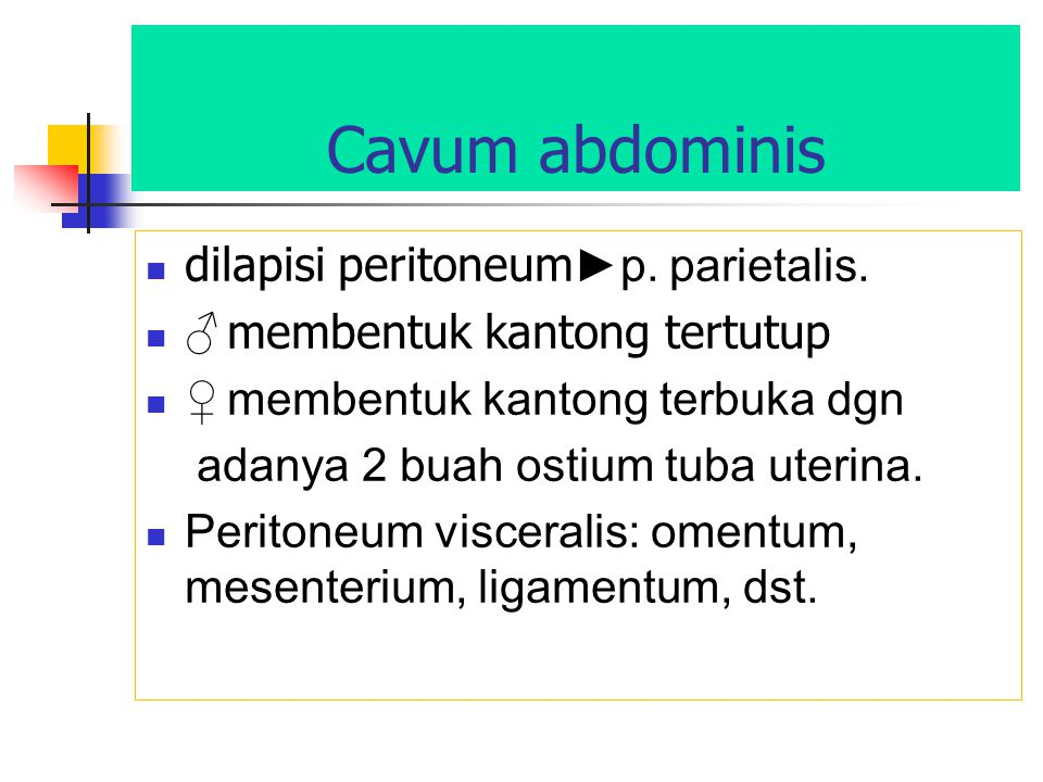 Cavum abdominis dilapisi peritoneum►p. parietalis.