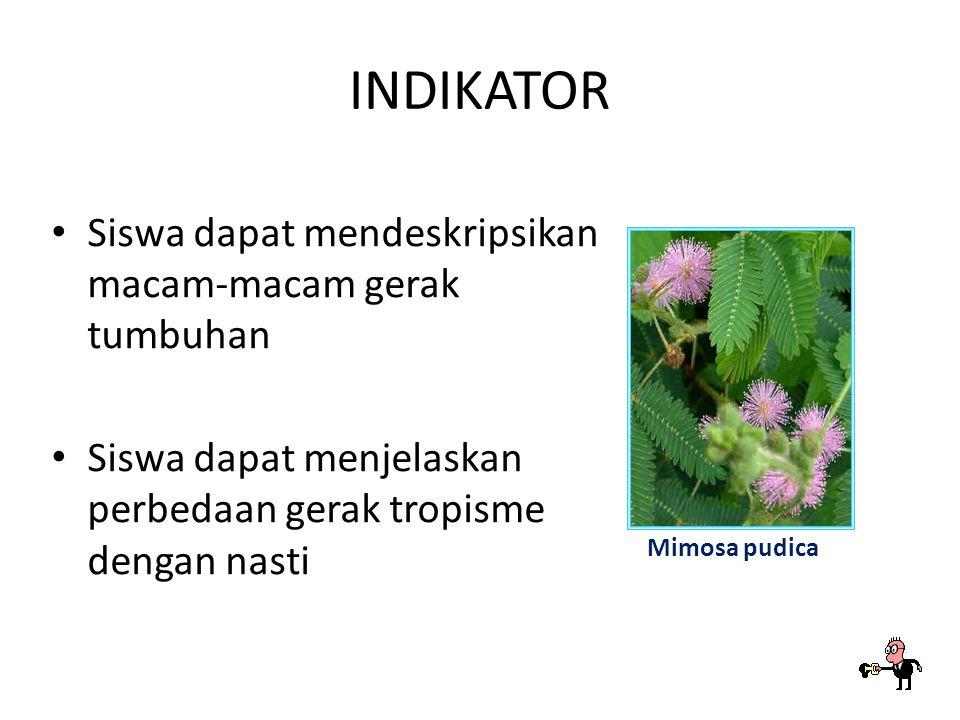 INDIKATOR Siswa dapat mendeskripsikan macam-macam gerak tumbuhan