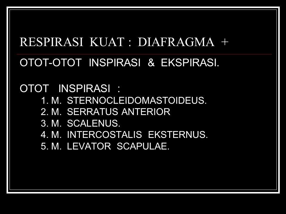 RESPIRASI KUAT : DIAFRAGMA +