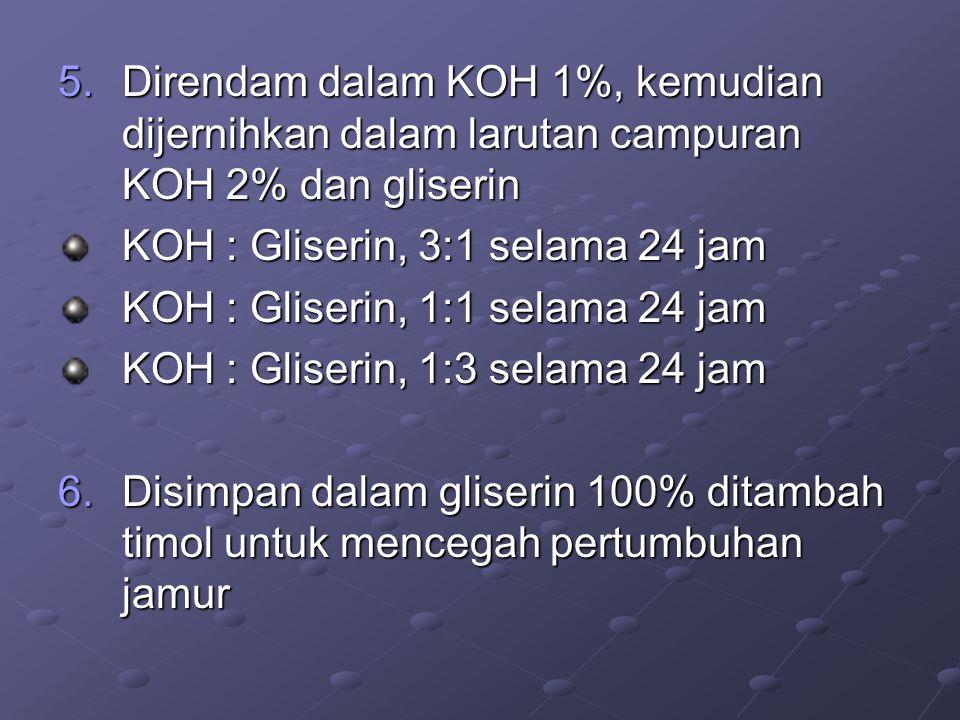 Direndam dalam KOH 1%, kemudian dijernihkan dalam larutan campuran KOH 2% dan gliserin