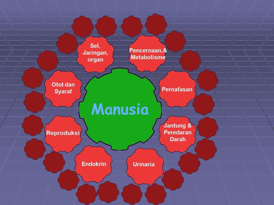 Manusia Reproduksi Sel, Jaringan, Pencernaan,& organ Metabolisme