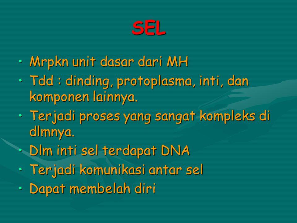 SEL Mrpkn unit dasar dari MH