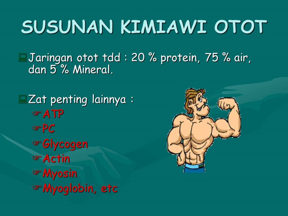 SUSUNAN KIMIAWI OTOT Jaringan otot tdd : 20 % protein, 75 % air, dan 5 % Mineral. Zat penting lainnya :