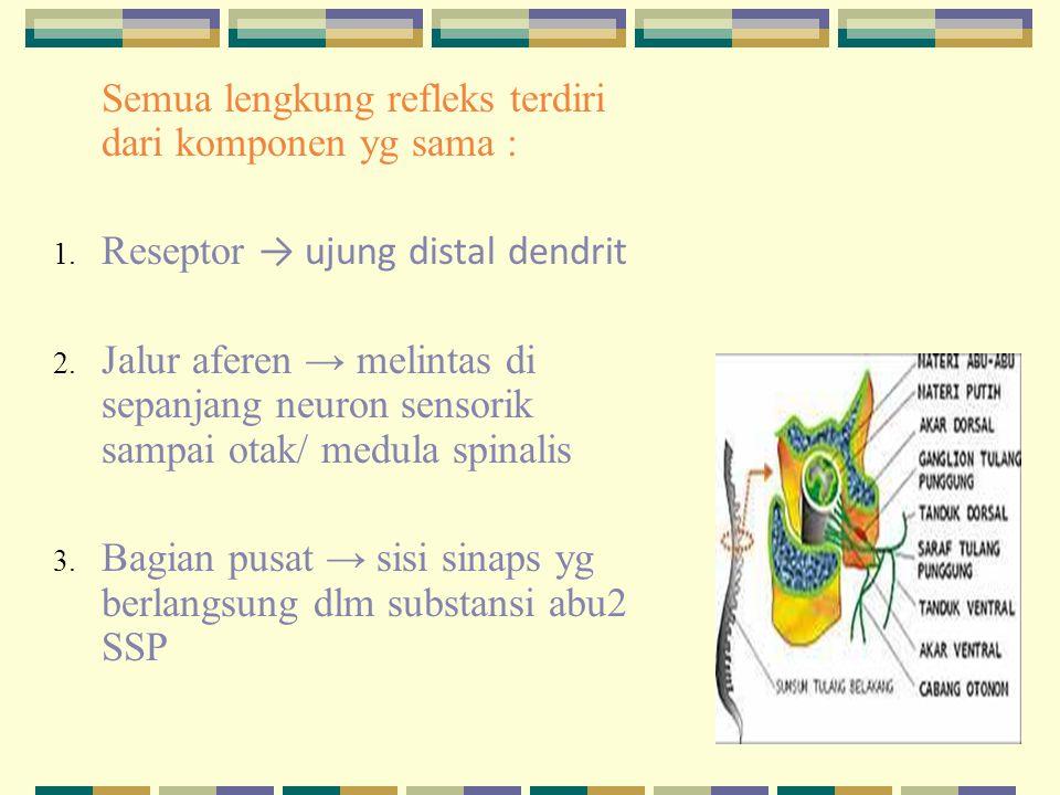 Semua lengkung refleks terdiri dari komponen yg sama :