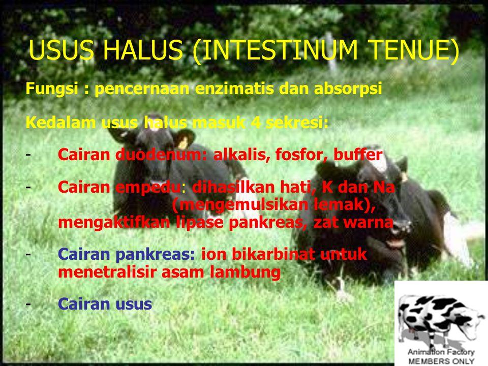USUS HALUS (INTESTINUM TENUE)