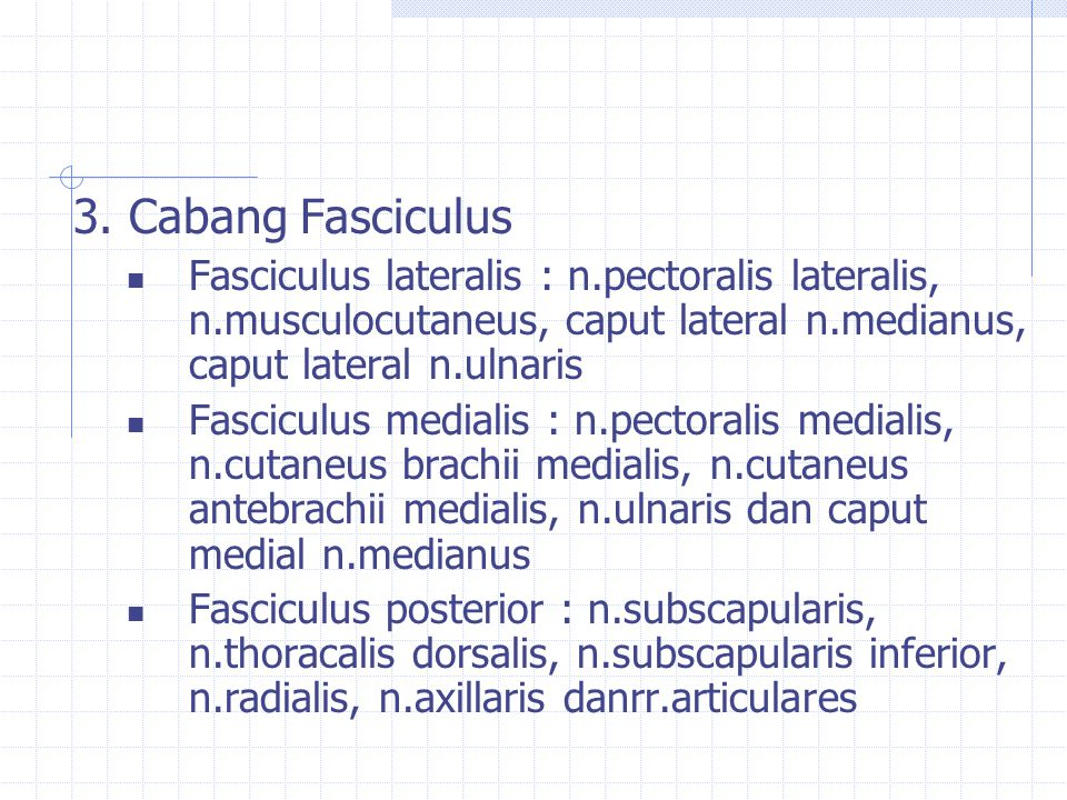 3. Cabang Fasciculus Fasciculus lateralis : n.pectoralis lateralis, n.musculocutaneus, caput lateral n.medianus, caput lateral n.ulnaris.
