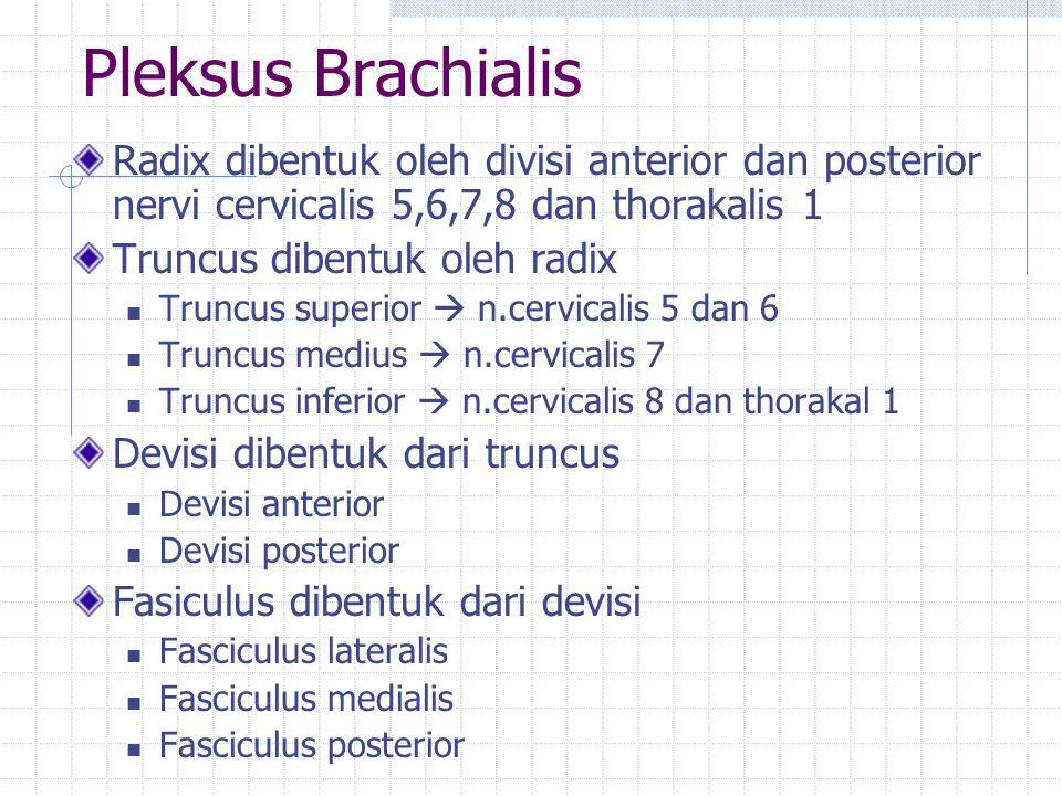 Pleksus Brachialis Radix dibentuk oleh divisi anterior dan posterior nervi cervicalis 5,6,7,8 dan thorakalis 1.