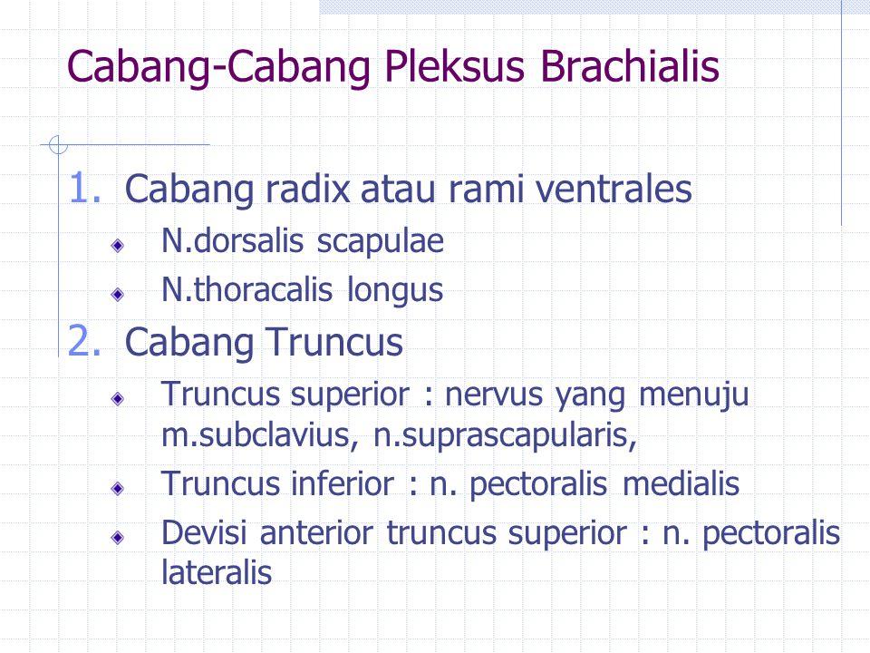 Cabang-Cabang Pleksus Brachialis