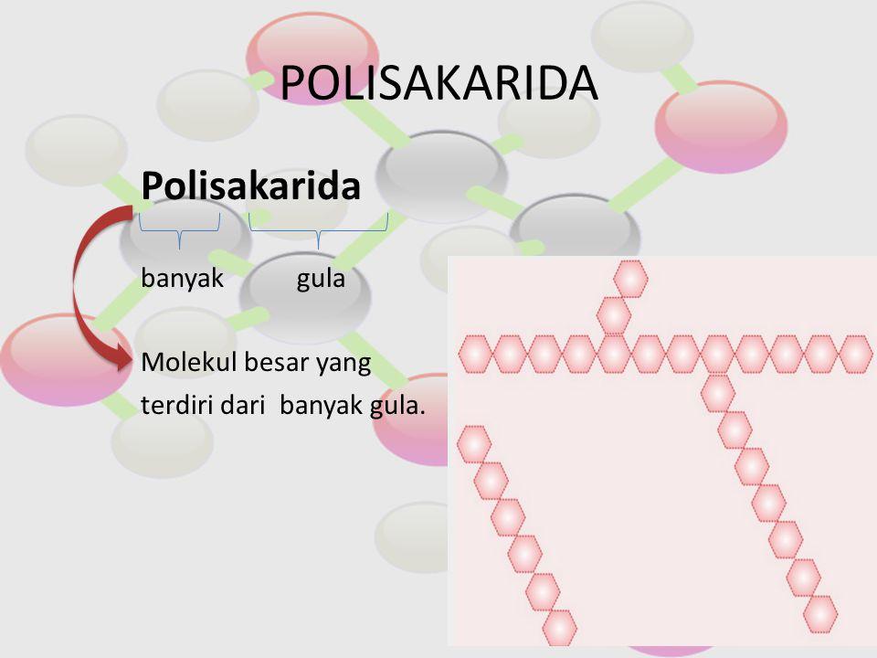 POLISAKARIDA Polisakarida banyak gula Molekul besar yang