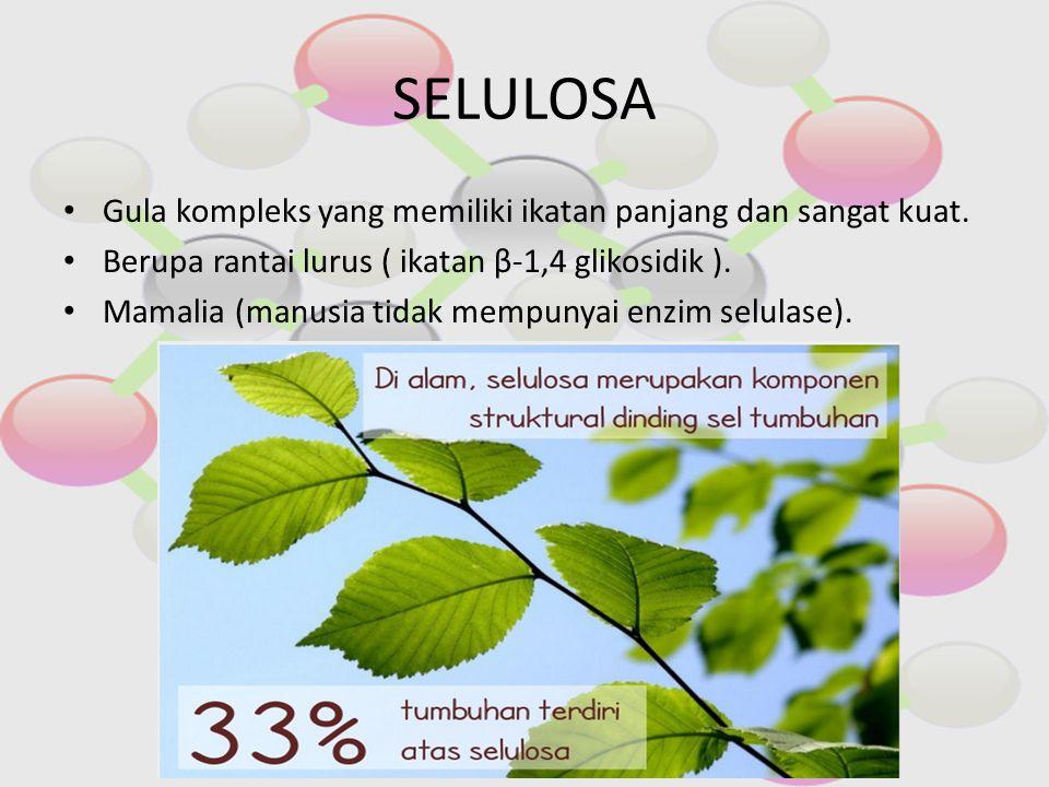 SELULOSA Gula kompleks yang memiliki ikatan panjang dan sangat kuat.