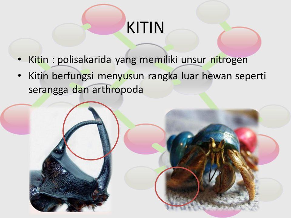 KITIN Kitin : polisakarida yang memiliki unsur nitrogen