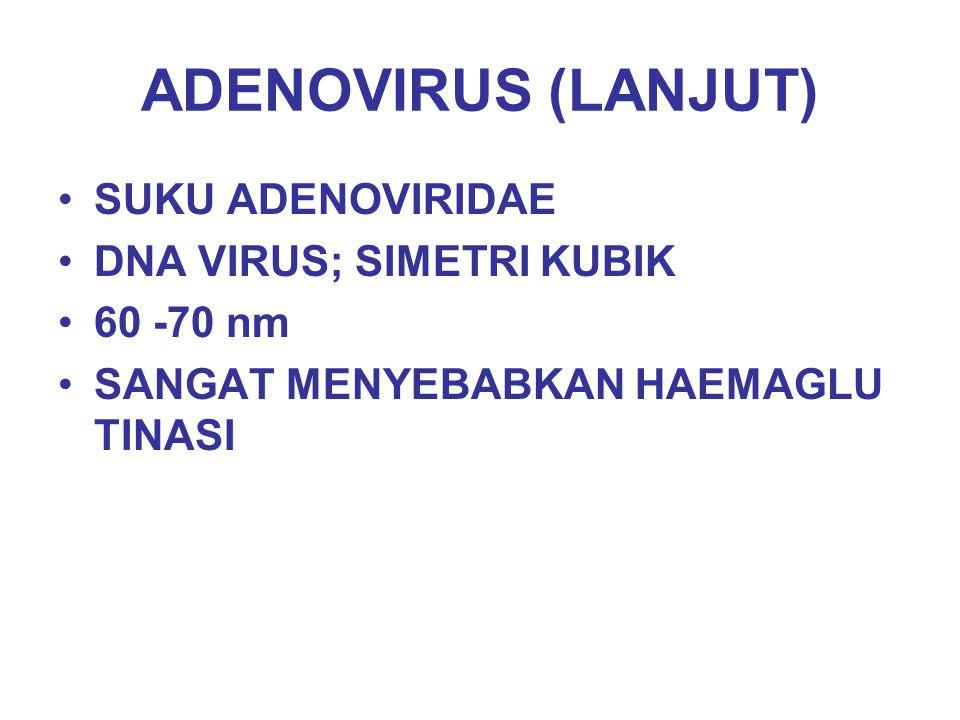 ADENOVIRUS (LANJUT) SUKU ADENOVIRIDAE DNA VIRUS; SIMETRI KUBIK