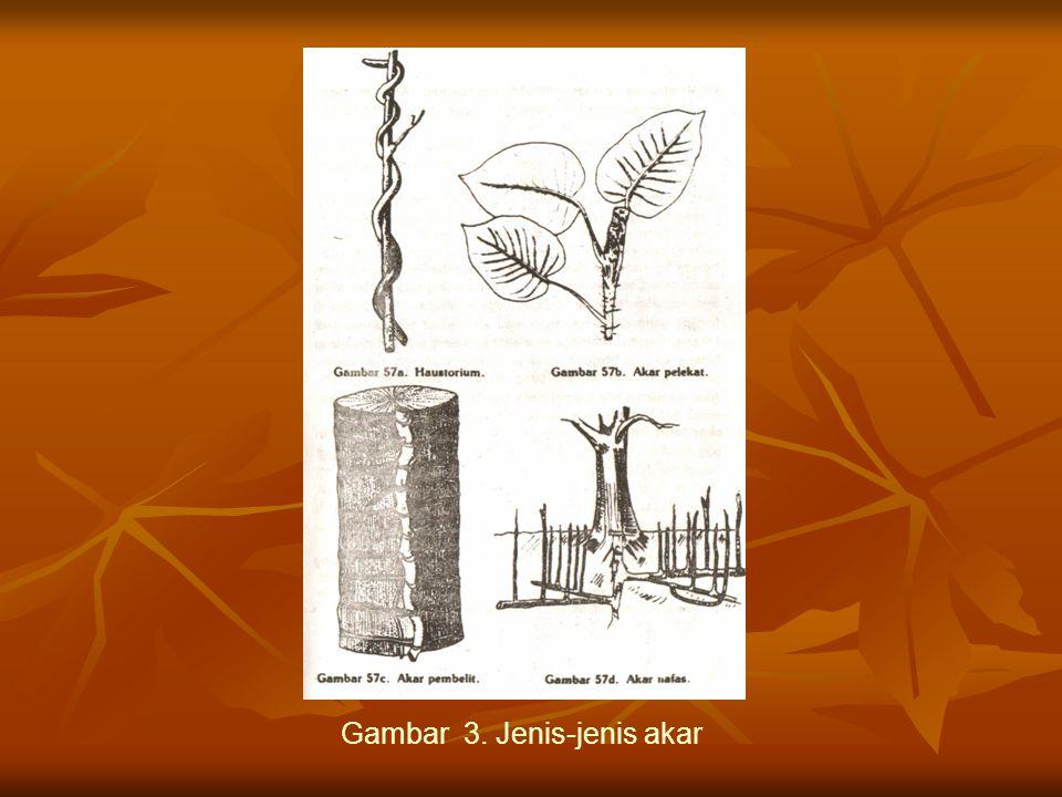 Gambar 3. Jenis-jenis akar