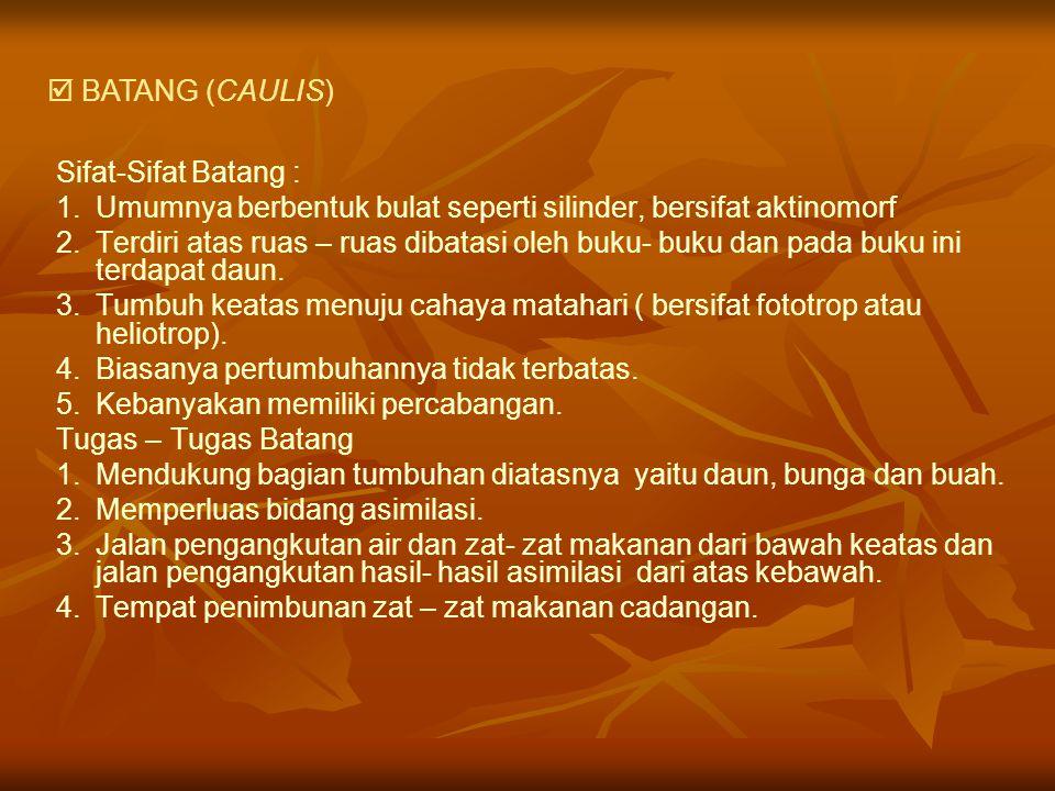  BATANG (CAULIS) Sifat-Sifat Batang : Umumnya berbentuk bulat seperti silinder, bersifat aktinomorf.