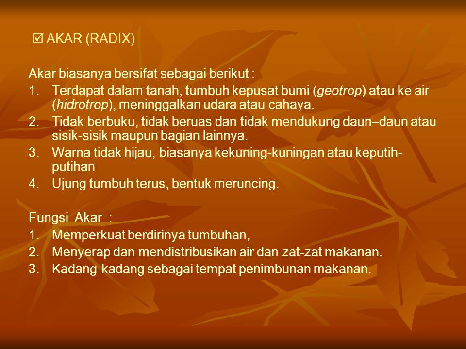  AKAR (RADIX) Akar biasanya bersifat sebagai berikut :