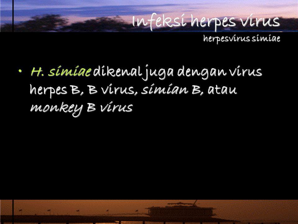 Infeksi herpes virus herpesvirus simiae