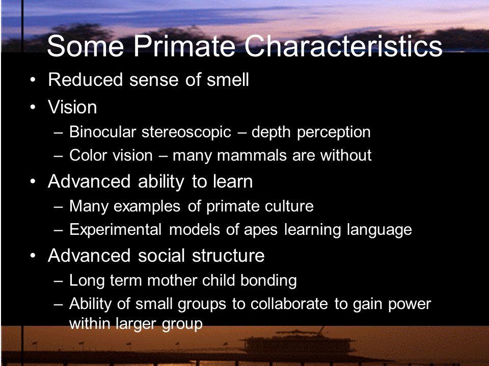 Some Primate Characteristics