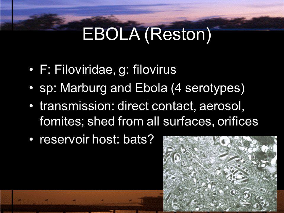 EBOLA (Reston) F: Filoviridae, g: filovirus