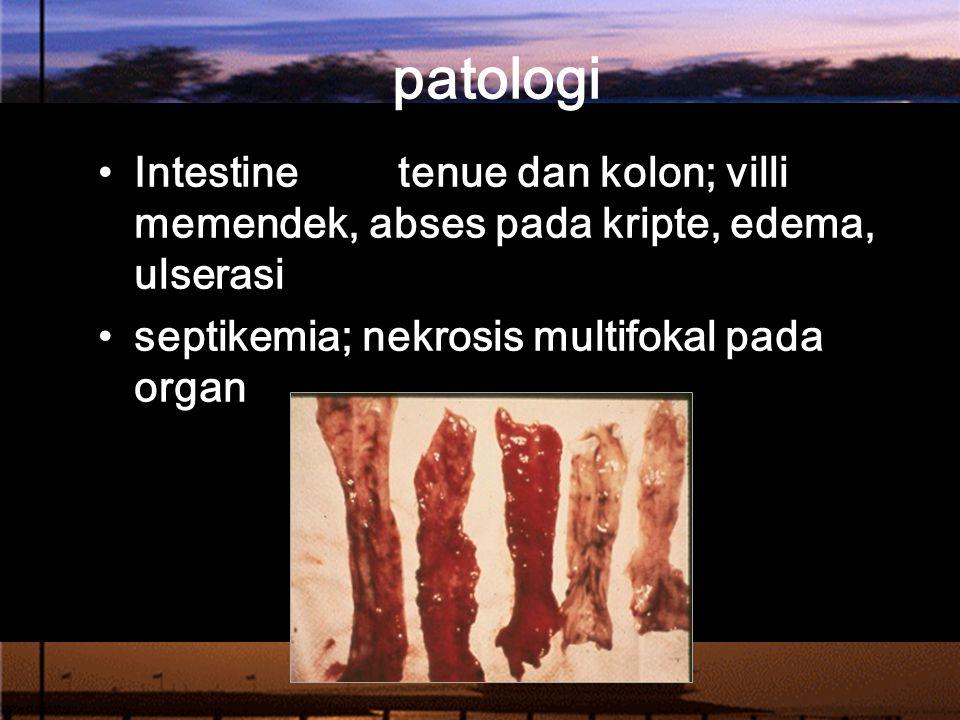patologi Intestine tenue dan kolon; villi memendek, abses pada kripte, edema, ulserasi.