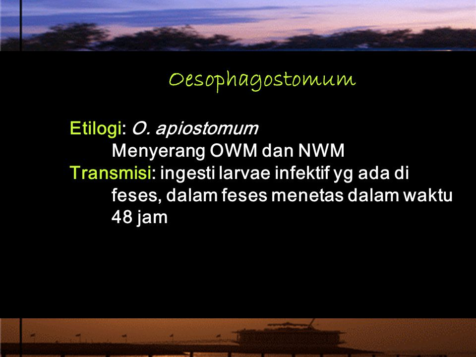 Oesophagostomum Etilogi: O. apiostomum Menyerang OWM dan NWM