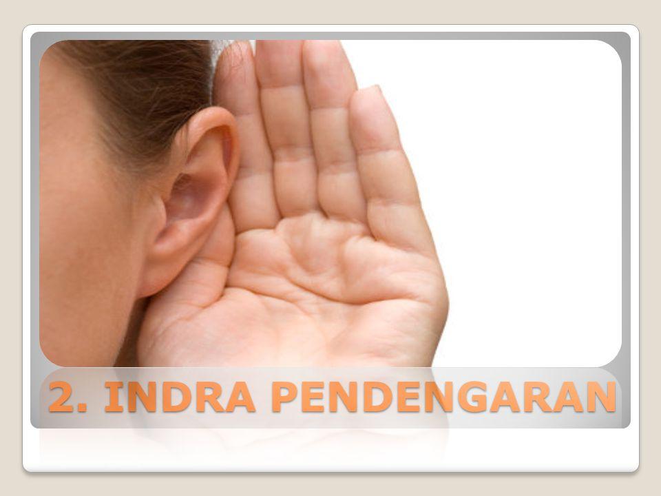 2. INDRA PENDENGARAN