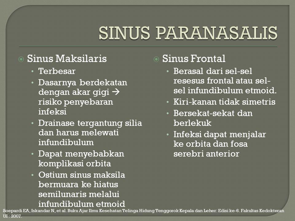 SINUS PARANASALIS Sinus Maksilaris Sinus Frontal Terbesar