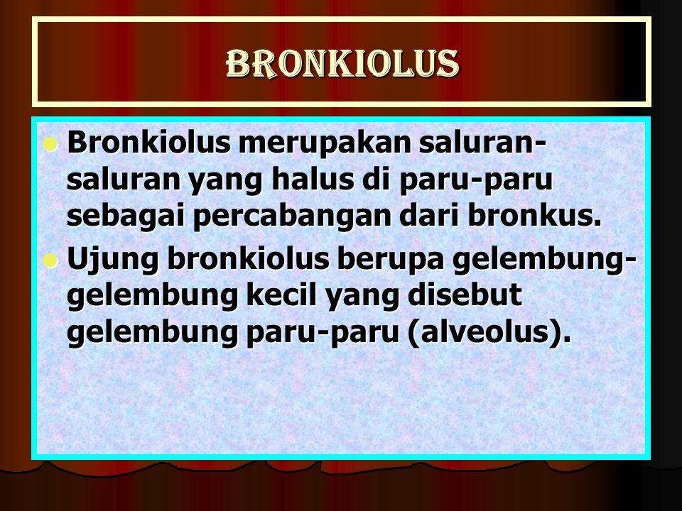 Bronkiolus Bronkiolus merupakan saluran-saluran yang halus di paru-paru sebagai percabangan dari bronkus.