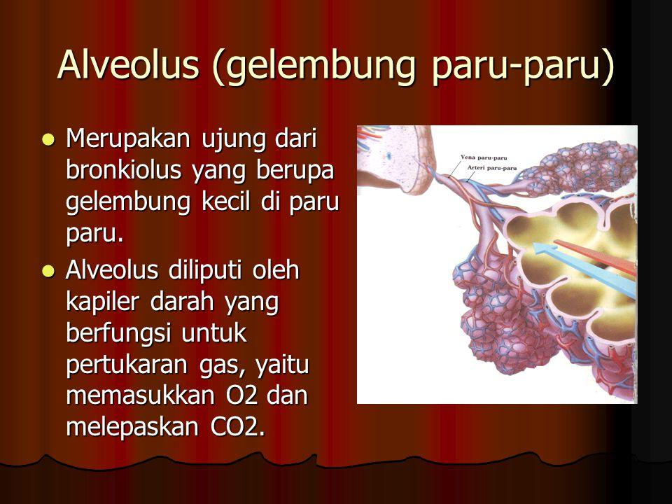 Alveolus (gelembung paru-paru)