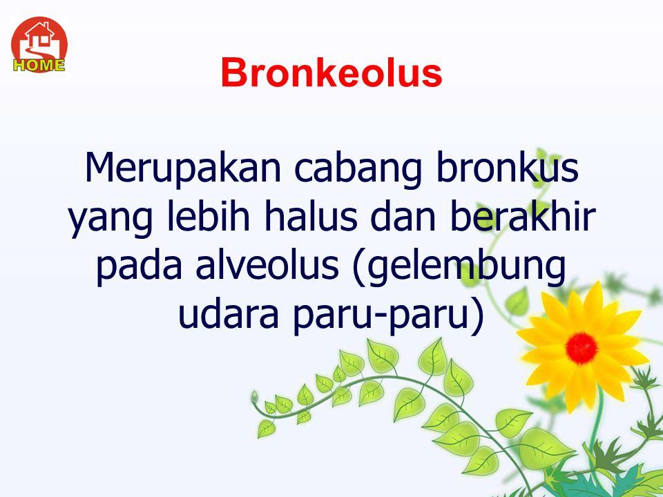 Bronkeolus Merupakan cabang bronkus yang lebih halus dan berakhir pada alveolus (gelembung udara paru-paru)