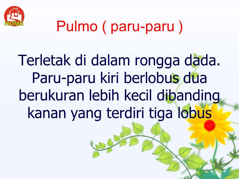 Pulmo ( paru-paru ) Terletak di dalam rongga dada.