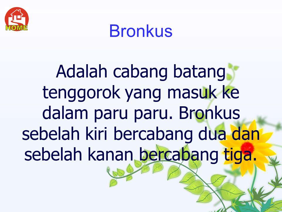 Bronkus Adalah cabang batang tenggorok yang masuk ke dalam paru paru.