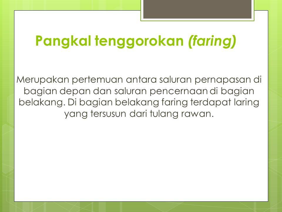 Pangkal tenggorokan (faring)