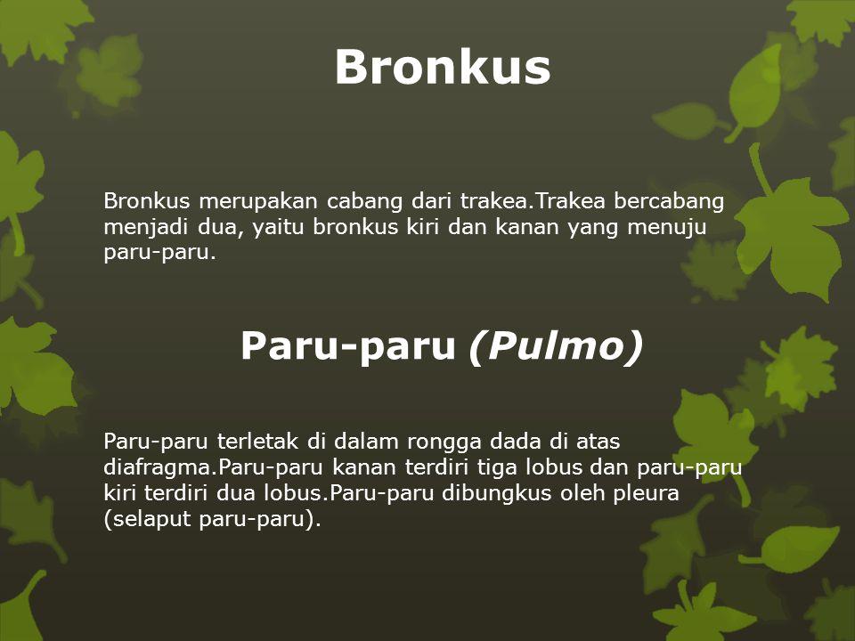 Bronkus Paru-paru (Pulmo)