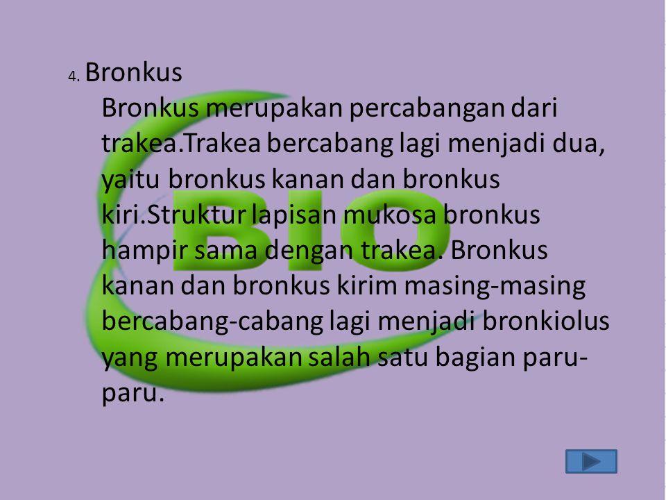 4. Bronkus