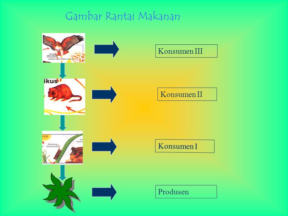Gambar Rantai Makanan Konsumen III Konsumen II Konsumen I Produsen