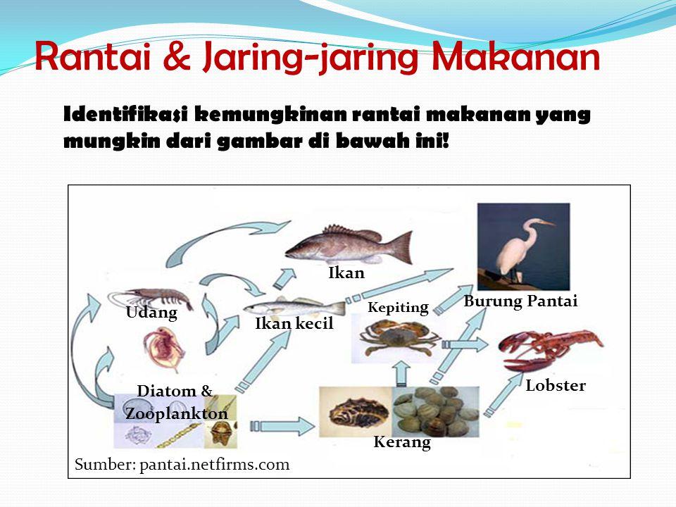 Rantai & Jaring-jaring Makanan