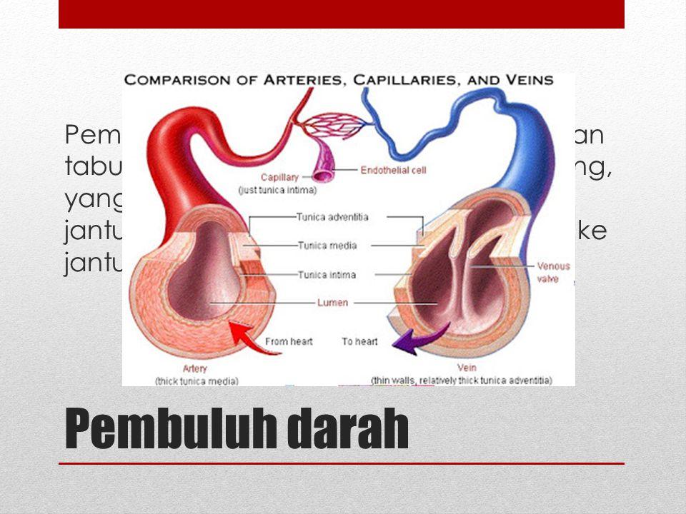 Pembuluh darah merupakan serangkaian tabung (saluran) tertutup dan bercabang, yang berfungsi membawa darah dari jantung ke jaringan, kemudian kembali ke jantung